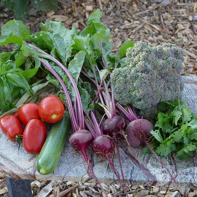 Fresh organic produce for the Good Samar