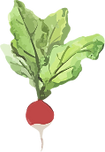 radish light copy.png