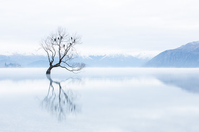 Wanaka Tree White