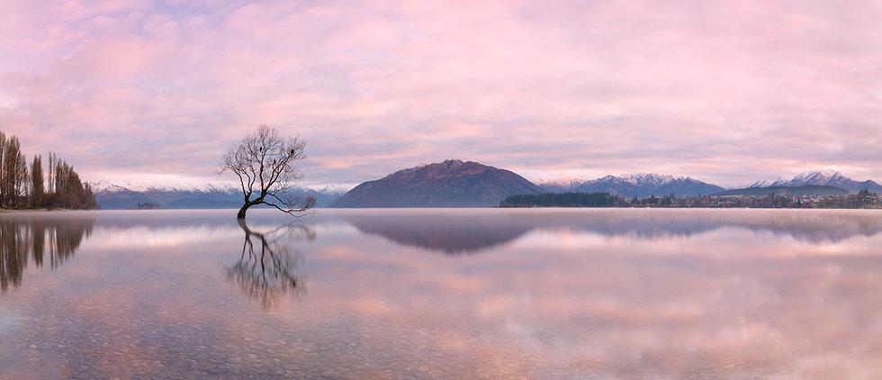 Wanaka Tree Panoramic