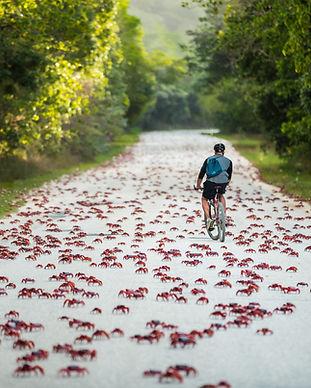 Rider_Crabs.jpg