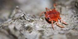 Baby Crabs