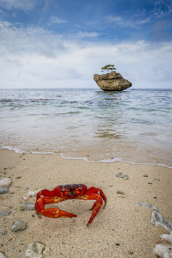 Red Crab on Beach