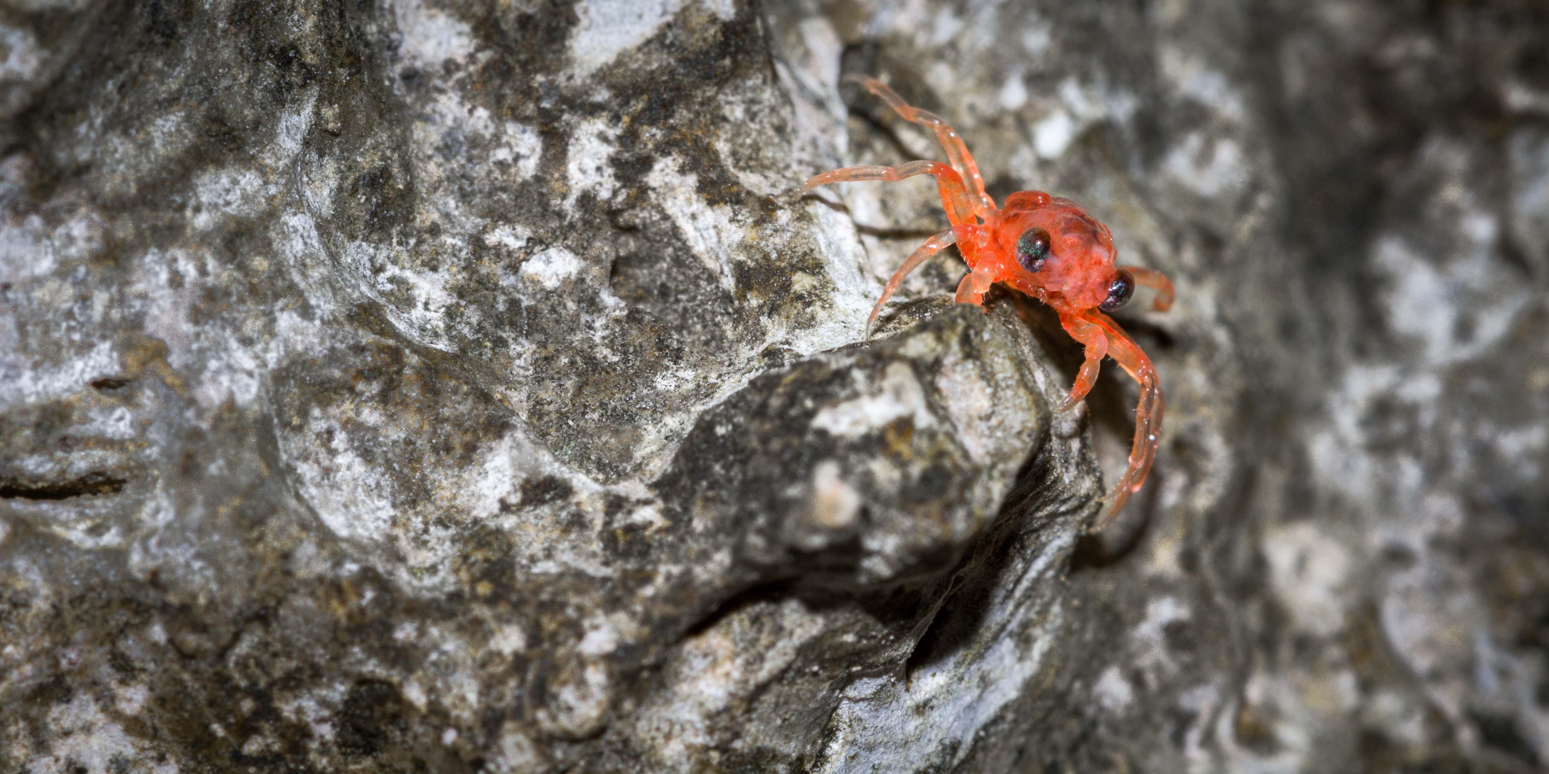 Baby Crabs-2