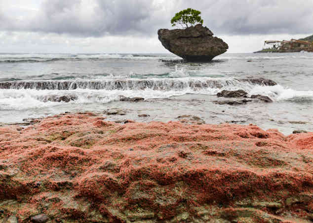 Christmas Island Red Crabs, Christmas Island Photography Tours, Christmas Island Photographer,