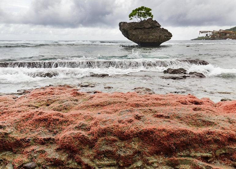 Cove Rock & Baby Crabs