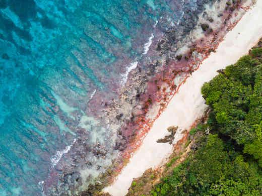 Christmas Island Red Crabs, Christmas Island Photography Tours, Christmas Island Photographer,