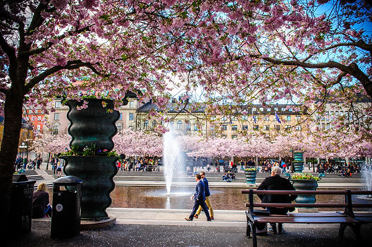 lola_akinmade_åkerström-cherry_bloom_i