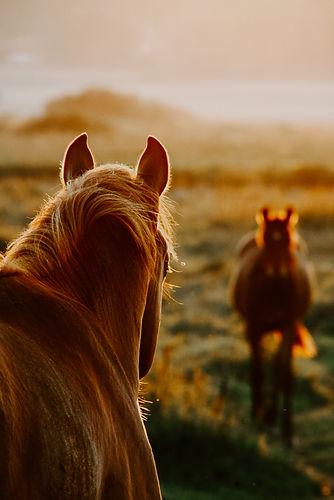 BEGEGNUNGEN HORSENSATION.jpg
