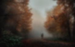 Mystisch im Wald-2.jpg