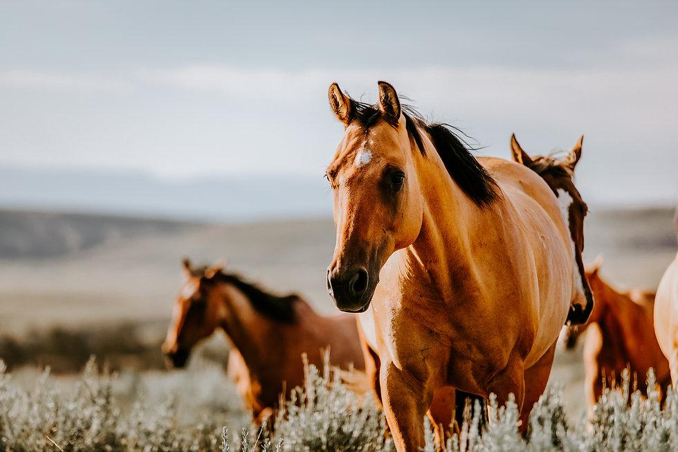 Kostenloses Beratung zum Pferd