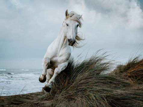 Die Revolution des Pferdeumgangs - Mein Manifest für ein friedvolles Miteinander