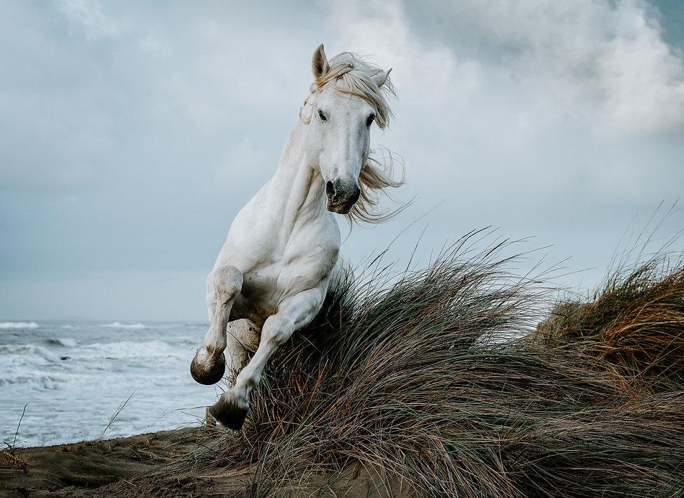 Die Revolution des Pferdeumgangs