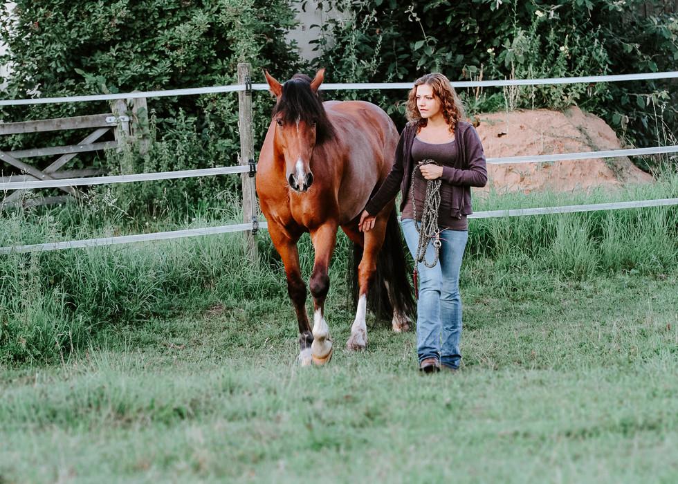 So fand ich zum friedvollen Umgang mit Pferden