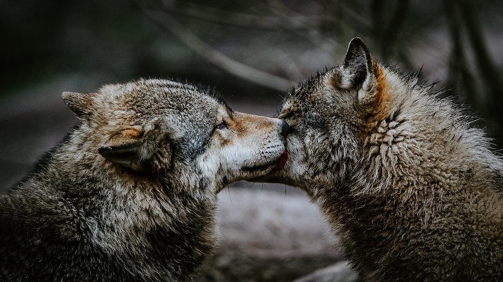 UNSHAKENBOND mit Krafttier Wolf.jpg