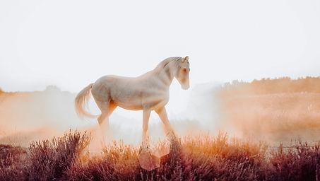 HORSENRICHMENT mit Krafttier Pferd-7.jpg