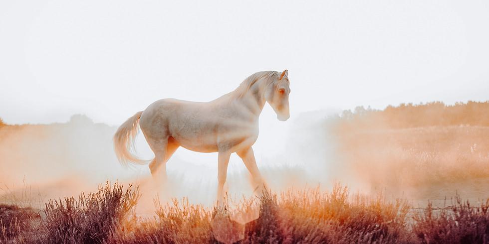 Beyond Horsetraining