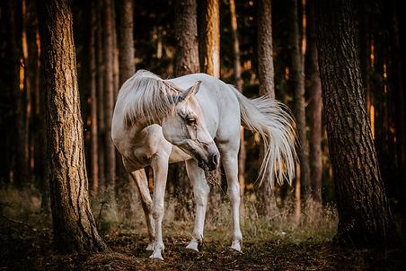 holz pferd.jpg