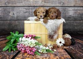 Lilo&Max.jpg