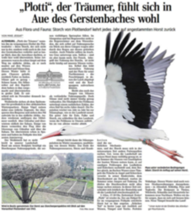 """OVZ-Artikel: """"Plotti"""", der Träumer, fühlt sich in der Aue des Gerstenbachs wohl"""