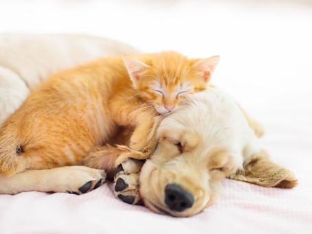 6 Reasons to Allow Pets in Rental Properties