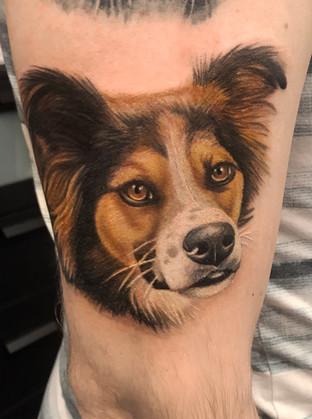hundportrait.jpg