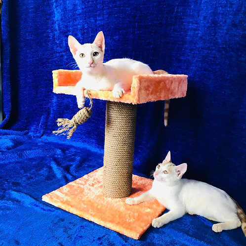 Kitten Cat Tower MadMo