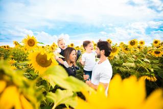 Fernanda, Daniel e seus meninos fofos no campo de girassol | Ensaio família em Brasília DF