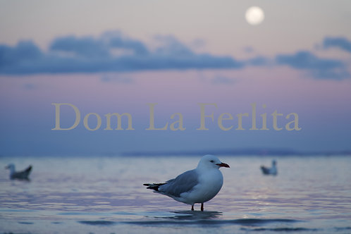 One Seagull (Pastel Sky) Photo