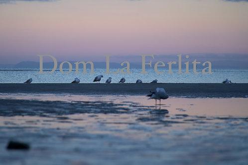 Seagulls under Pastel Sky Photo