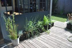 Pépinière de plantes sauvages, 93