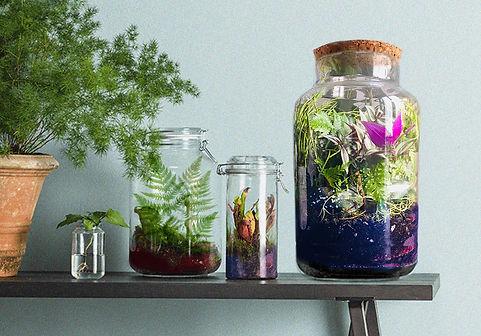 Collection de terrariums..jpg