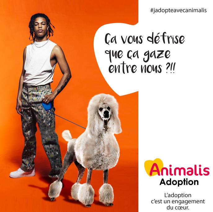 créa adoption 2.jpg