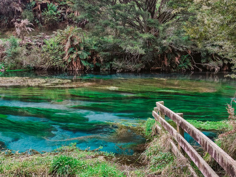 Putaruru Blue Spring, New Zealand: Everything You Need To Know
