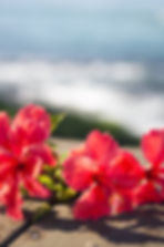 Red hibiscus and the sea-4.jpg