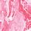 Thumbnail: Blush Ruby - Yoga Mat