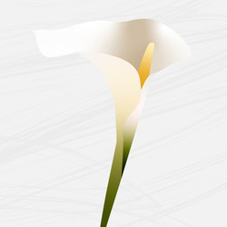 אביב עומרי שלייסר - פרח