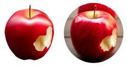 תפוח במאש - מיטל שכטר
