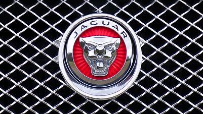 יגואר | לוגו עם חיות | סטודי קורלי