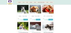 איילת תמיר - עיצוב אתר