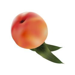 אפרסק במאש - אביב עומרי שלייסר