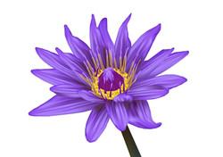 פרח תלת מימד - סיוון קמאי
