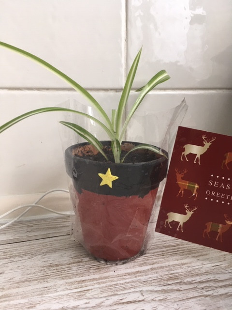 Black painted rim for belt with gold star sticker and painted red bottom of pot, in cellophane bag with tag. Pot contains spider plant.