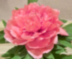 Donna Rose 3.jpg