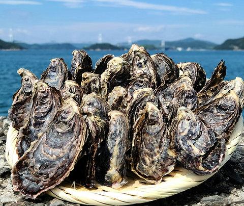 愛媛産 活真牡蠣 約2kg