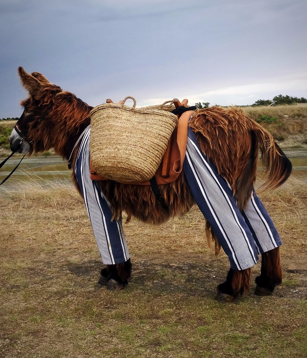 Galopin et ses culottes le charroiv2016
