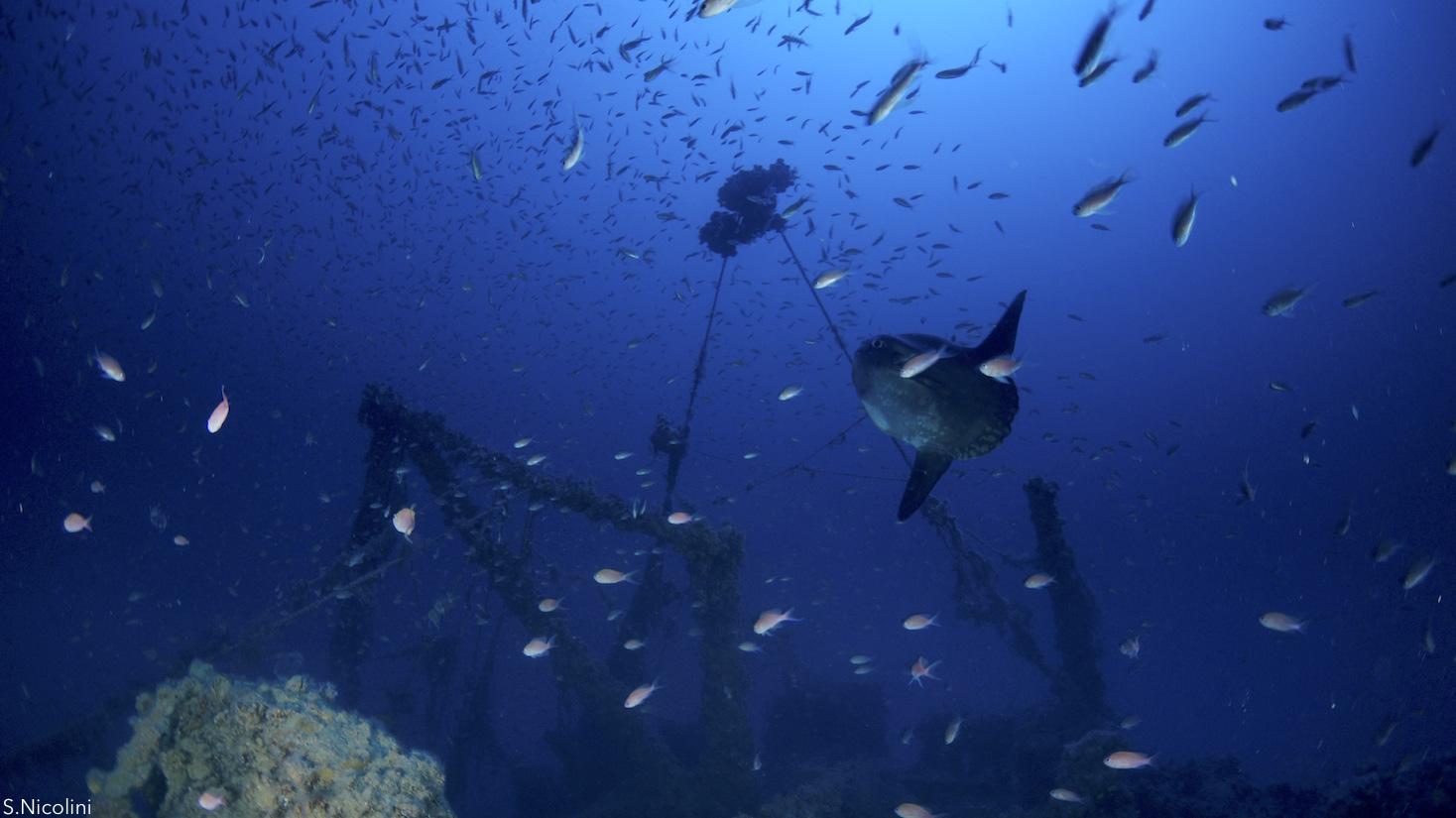 pesce luna, prua del relitto marsala