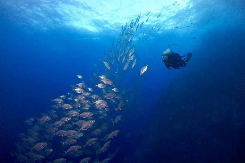 FULL DAY DIVING TRIP - Scuba Diving