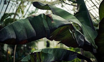 2020_02_23 Kew Gardens 35mm Roll 1 029.j