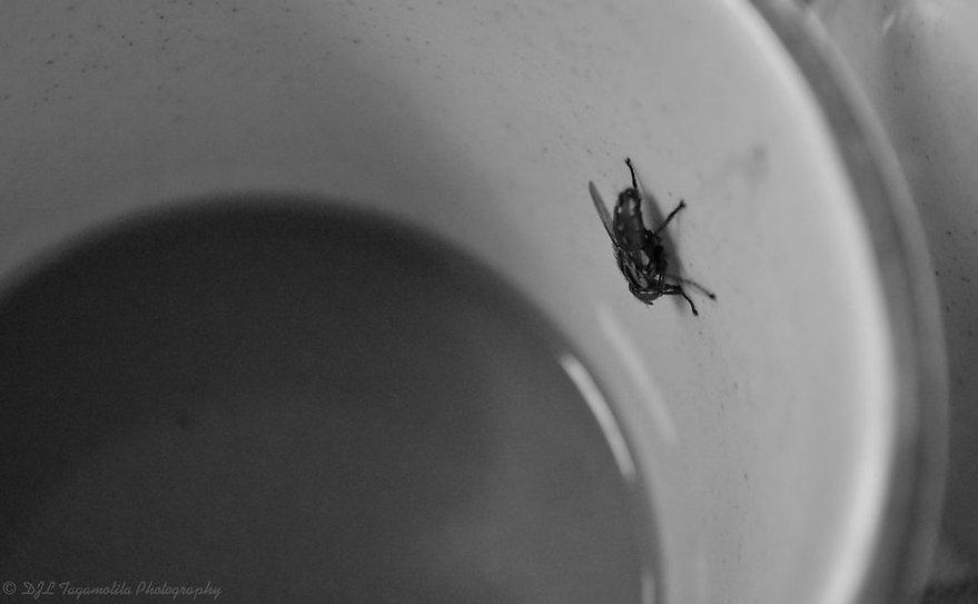 coffee-cup-fly.jpg